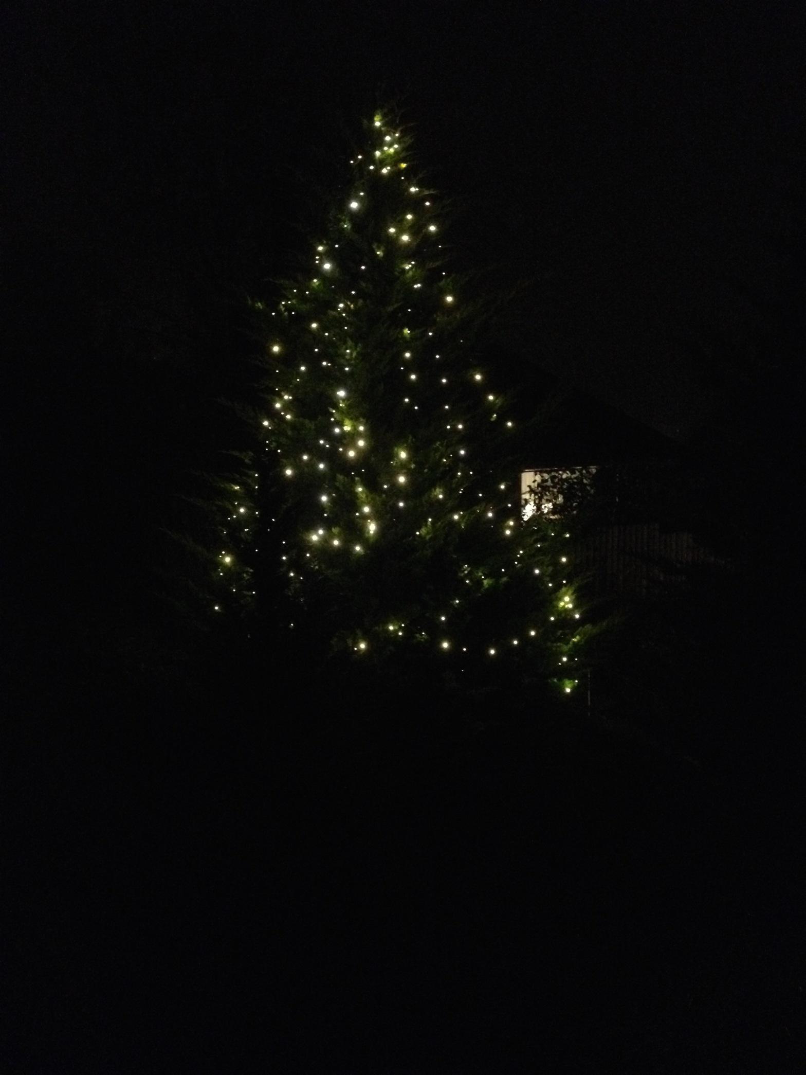 Baum mit Weihnachtsbeleuchtung im Advent