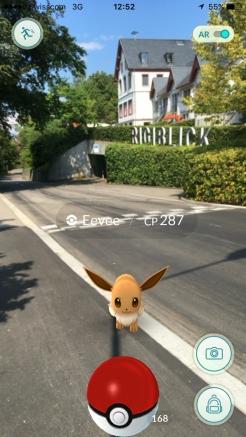 Ein wildes Evoli beim Rigiblick. Screenshot: pw.